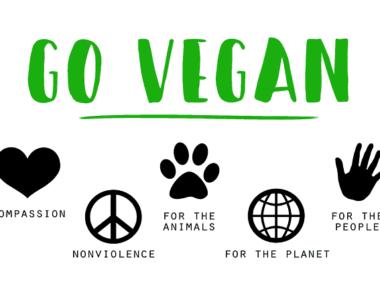 Vegan- gesund oder wie?